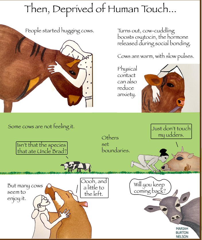 infographic showing the benefits of hugging cows